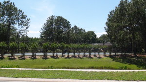 Cross-Creek-New-Tampa-Homes-For-Sale-19
