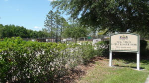 cross creek new tampa homes for sale (3)
