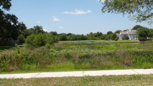 Cross-Creek-New-Tampa-Homes-For-Sale-21
