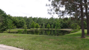 Hunters Green Landscaping, Tampa Real Estate